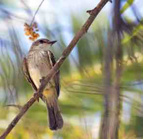 birdwatching Himmel Park Tucson