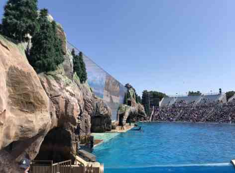 shows SeaWorld San Diego