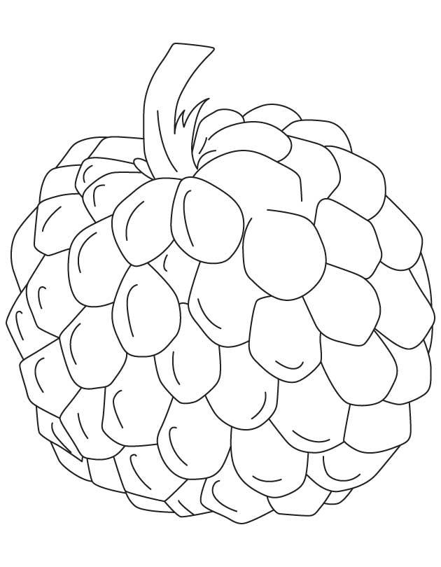 Desenho De Fruta Do Conde Grande Para Colorir Tudodesenhos