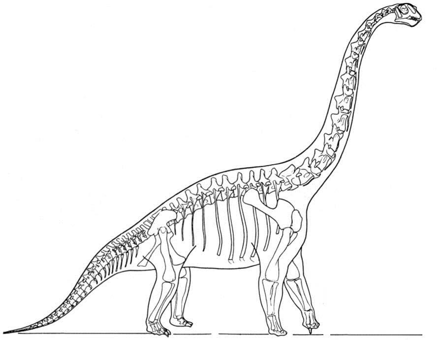 Desenho de Esqueleto de Branquiossauro para colorir