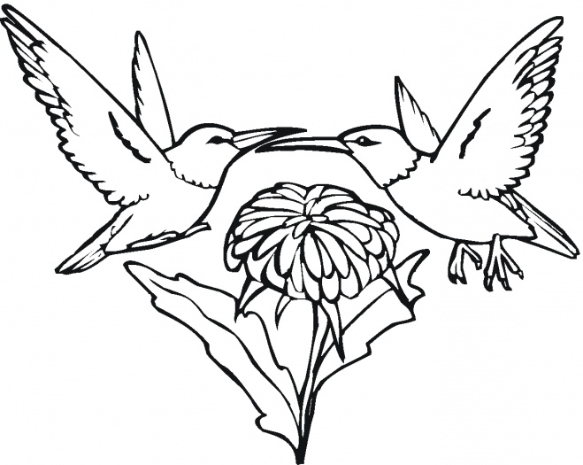 Desenho De Beija Flor Para Colorir