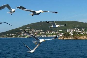 Vier Möwen sind vor einem Foto von zwei der Prinzeninseln zu sehen. Das dunkelblaue Wasser des Marmarameer ist do zu sehen.