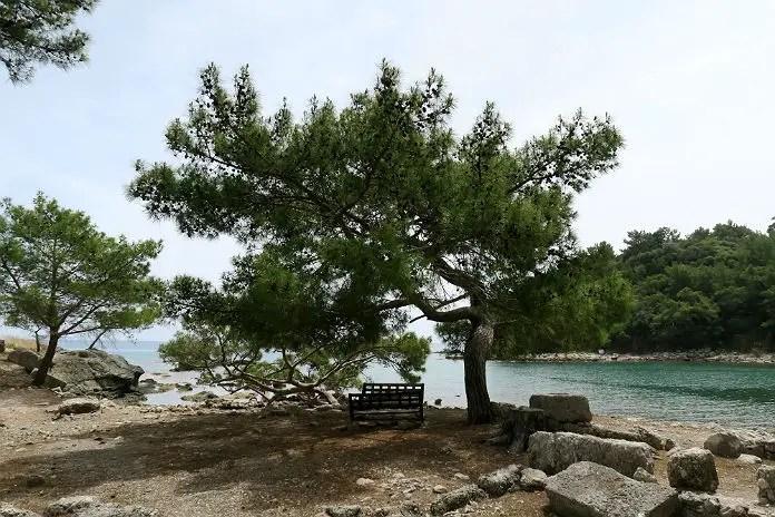 Parkbank im Schatten eines einzelnen Baumes am alten Kriegshafen von Phaselis. Hinter dem Baum ist das Meer zu sehen und auf der rechten Seite ein kleiner Wald.