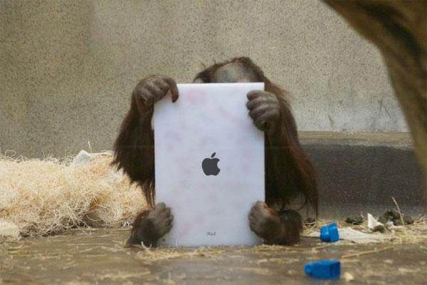 orangutan tablet ipad