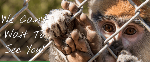 Se vende zoológico por ©Internet con animales incluidos