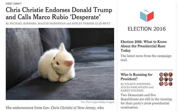Donald Trump kittens