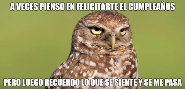 43 Memes cumpleaños animales divertidos