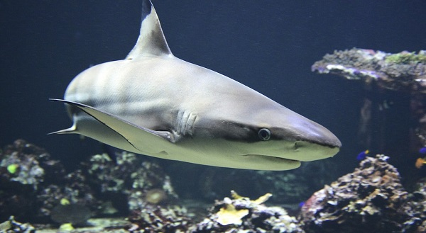 Permalink to Esta es la app con la que podrás seguir tiburones desde el móvil