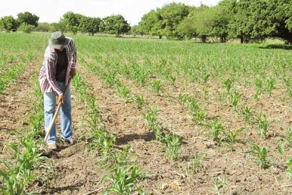UE quer controlo sobre a patente das sementes e tornar ilegal as sementes não registadas