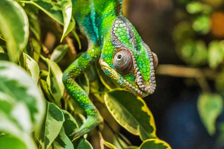 Naturaleza en el parque nacional de Isalo, en Madagascar