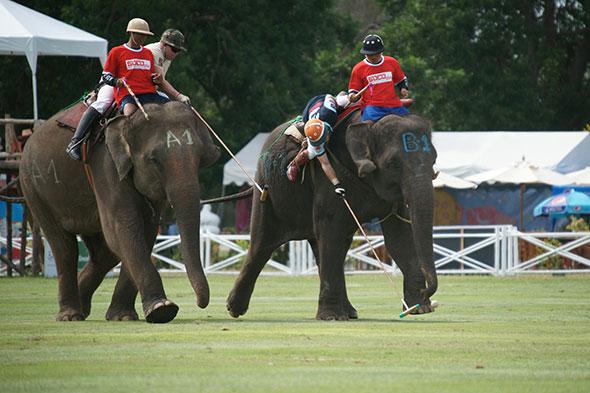 Copa del Rey de Polo en Elefante de Tailandia