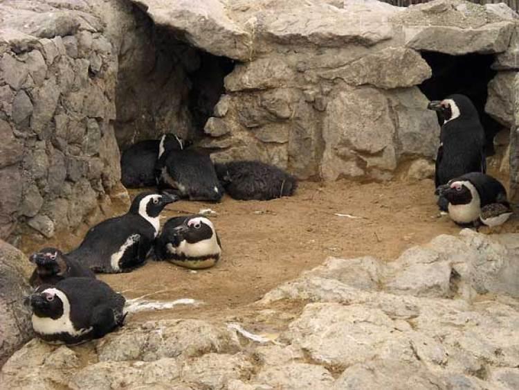 Zoo de la Magdalena, Santander