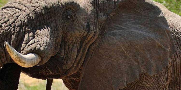 Elefante en el Parque Nacional de Kruger