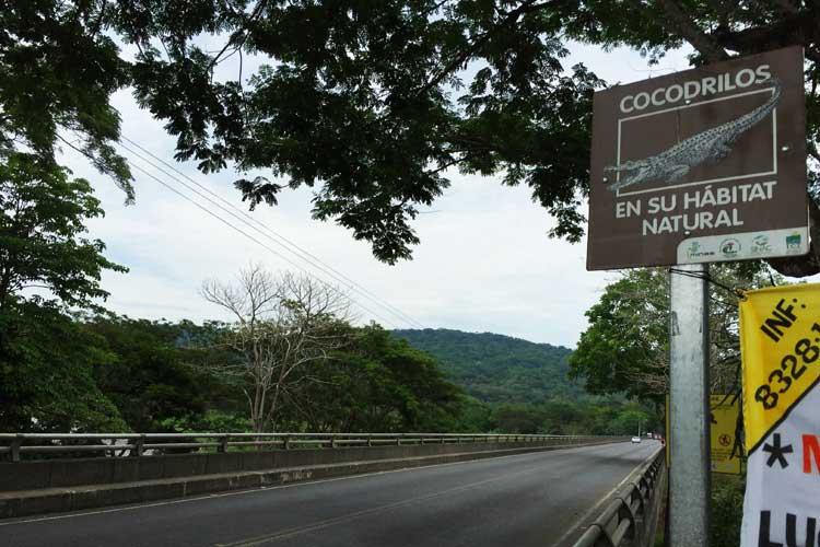 Tu Gran Viaje a Costa Rica. Cocodrilos en Tortuguero