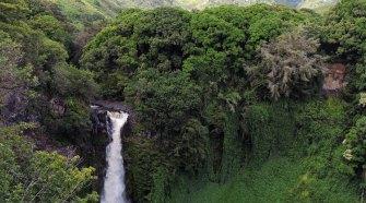   Naturaleza en las islas del Pacífico   Tu Gran Viaje