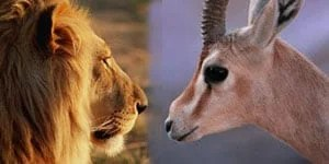 Tuğşah Bilge – Afrikada Ceylan Ya Da Aslan Olmak.