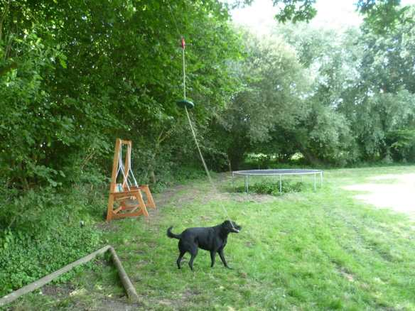 junior-zipline-and-dog-joining-in