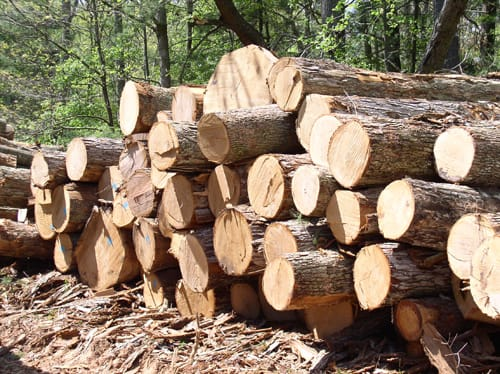 Timber Price Rises