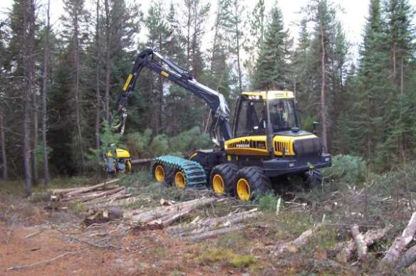 Spruce Harvest