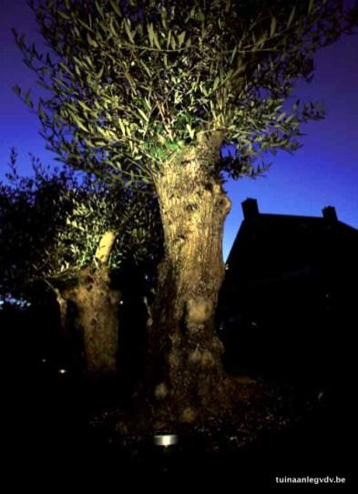 tuinverlichting_7.png