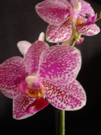 Namen van mijn orchideen