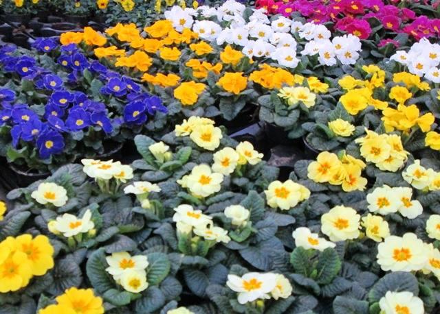 Planten kopen in OostVlaanderen  Tuincenter Vincent
