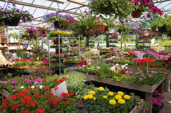 Tuincentrum-bloemsierkunst-Odink-tuincentrum-3353