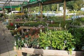 tuincentrum-bloemsierkunst-hoveniersbedrijf-Odink-5777