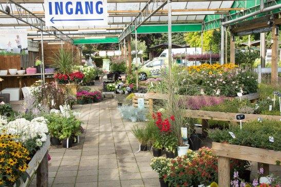 tuincentrum-bloemsierkunst-hoveniersbedrijf-Odink-5778