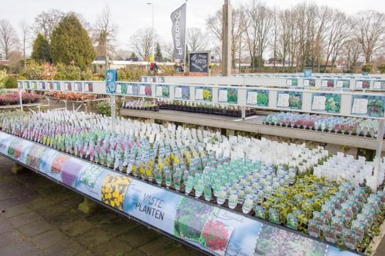 vasteplantensystem-tuincentrum-Odink-7438