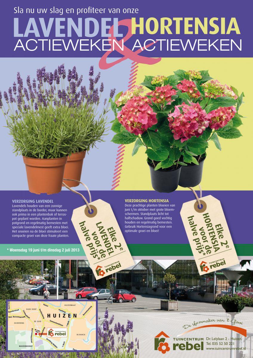 Lavendel  Hortensia actieweken  Activiteiten