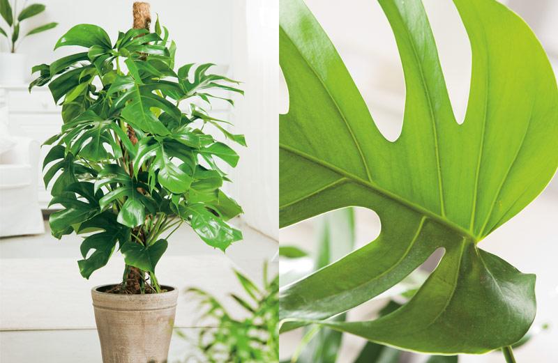 6x grote kamerplanten als blikvanger  Tuinen