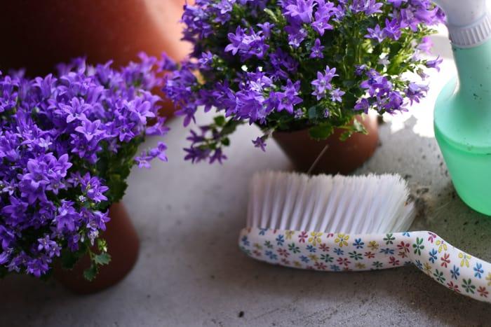 De beste planten voor bijen