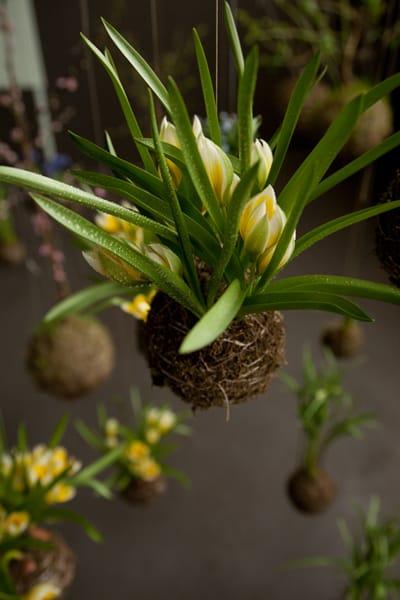String gardens hangende planten uit Amsterdam  Tuin en