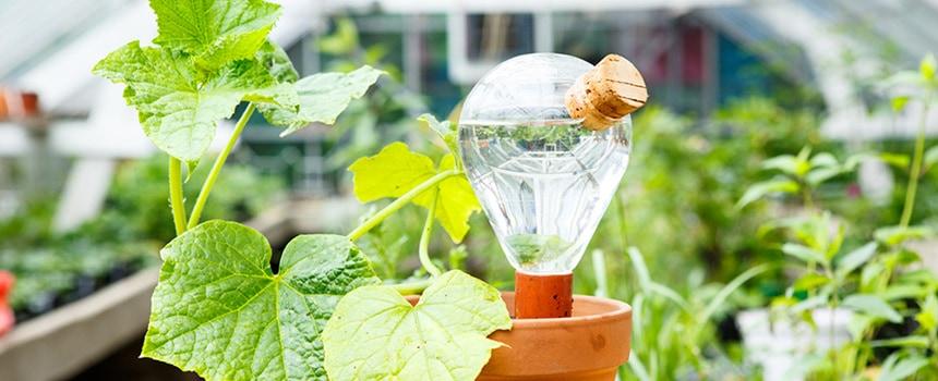 Waterworks biedt automatische irrigatie via een gloeilamp