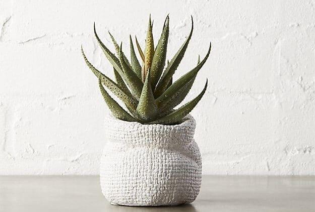 Een betere nachtrust met deze 5 planten in de slaapkamer