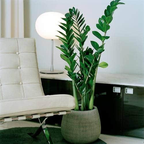 5 ideale kamerplanten voor in een donker huis  Tuin en Balkon