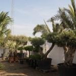 Palmen Outlet