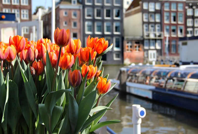 10 tips for visiting Amsterdam