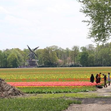 Travel Guide Amsterdam Tulips Keukenhof