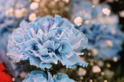 Winter Wedding Color Ideas For Teal  Pale Blue  Tulle  Chantilly Wedding Blog