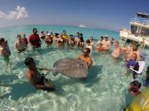 Best of 2015 Photos - Sting Ray City