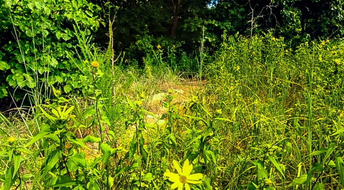TUWC: Whats next for the Tulsa Urban Wilderness Coalition?