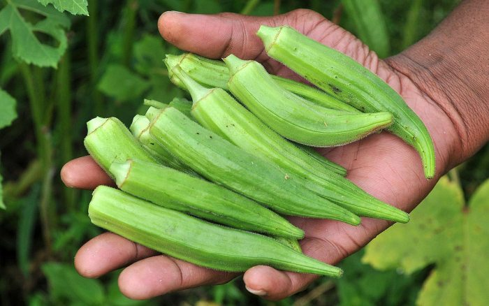 This Is Why Men Should Not Eat Okra(Delele)