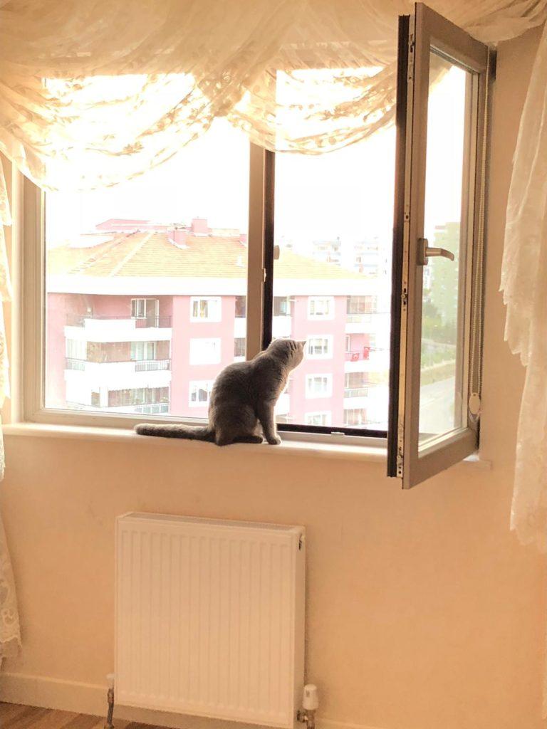 Ankara Kedi Sineklikği Eryaman