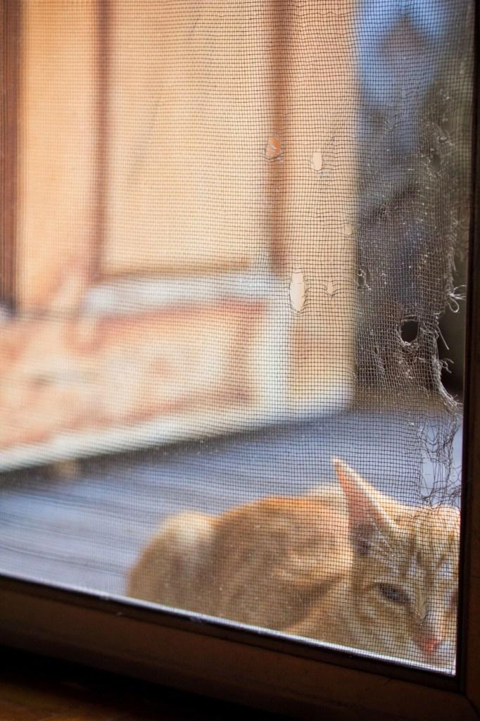 Ankara Yaşamkent Çayyolu Kedi Sineklik