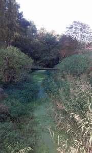 Kanał Parchański Modliborzyce Balczewa las rezerwat