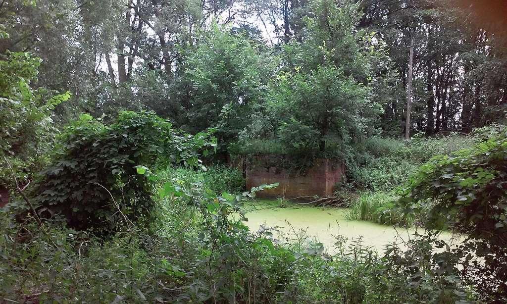 Inowrocław Kujawy Wild Dzika Stara Noteć Notec river odnoga rzeki zdjęcia fotografie pięne zielona zielony zieleń dzikość przyrody natury wypoczynek nad rzeką