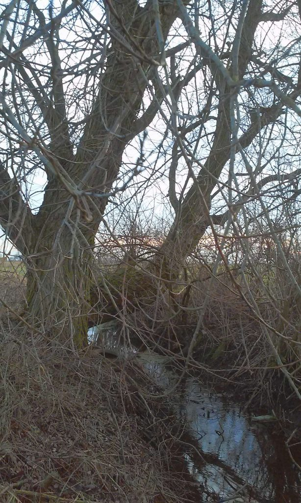 old groth tree sare drzewa nature przyroda protection Inowrocław Kujawy Poland środowiska wycinka natury lasy animal wegan vegun ekologia ecology
