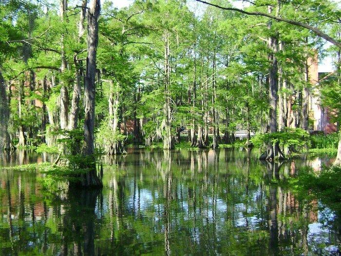 Cypress Swamps atGrand Bay Wildlife Management Area at Valdosta, Georgia